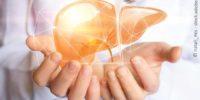 Grafische Darstellung Der Leber Mit Händen Eines Arztes