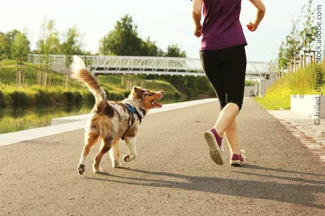 Mit Hund Laufen